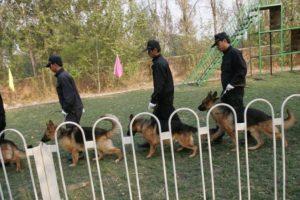 Perros de intervención (protección, antidisturbios) Foto:Getty Images. Imagen Por: