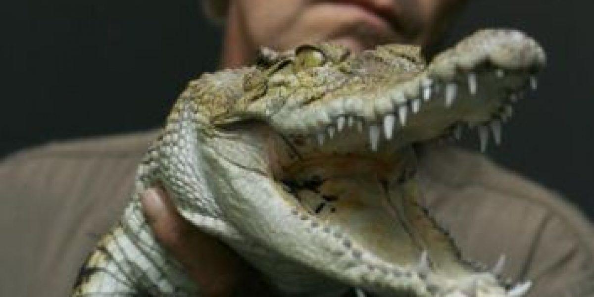 Policías encontraron la pata de un cocodrilo en un automóvil