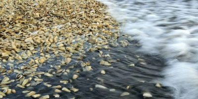 Gobierno ampliará zona de marea roja a una parte de la Región de Los Ríos