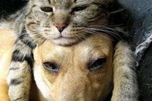 Así como sus parientes salvajes, los gatos son cazadores, particularmente eficaces de noche, por su buena visión e oído. Foto:Vía Pinterest. Imagen Por: