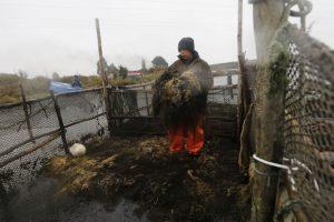 Pescador artesanal Manuel Paredes (46). Foto:ATON CHILE. Imagen Por: