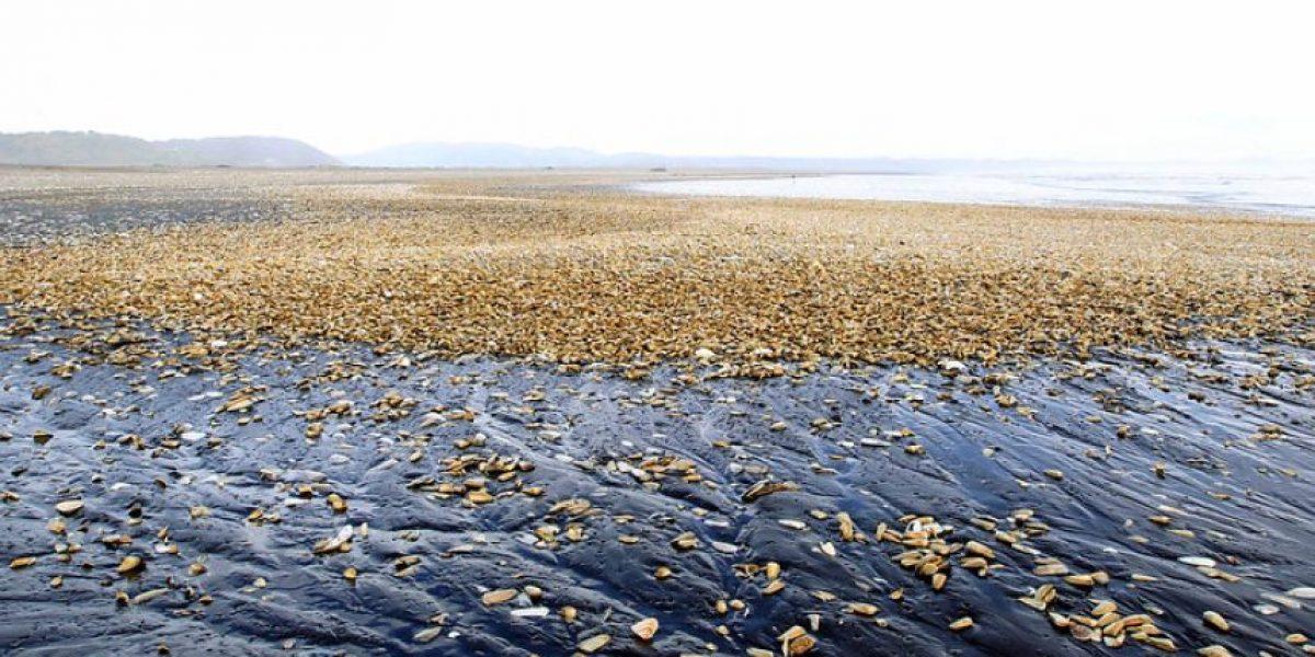 Seis claves para entender la marea roja que afecta a la X Región