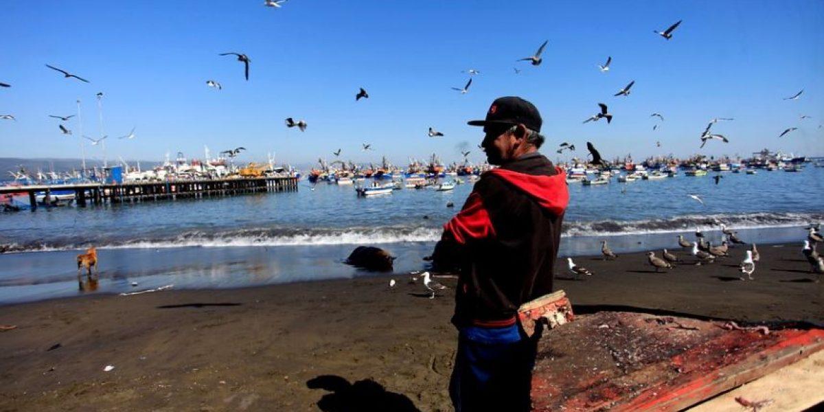 Afectados por marea roja en Carelmapu denuncian que recibieron alimentos con larvas de gusanos