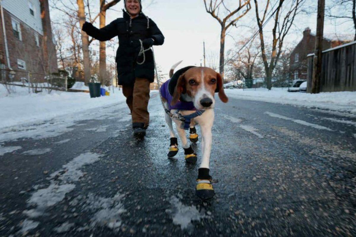 Y los sacan a pasear cuando ustedes no tienen el tiempo. Foto:Getty Images. Imagen Por: