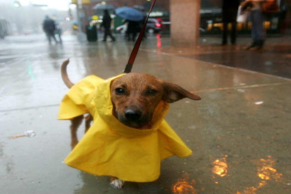 Gracias a las guarderías caninas, los perros aprenden a convivir con los de su misma especie. Foto:Getty Images. Imagen Por: