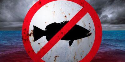 Marea roja: presentarán demanda contra Sernapesca y la Armada