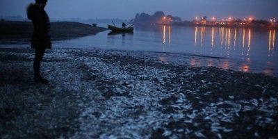 Municipio de Ancud presenta este lunes demanda ambiental contra la Armada y Sernapesca