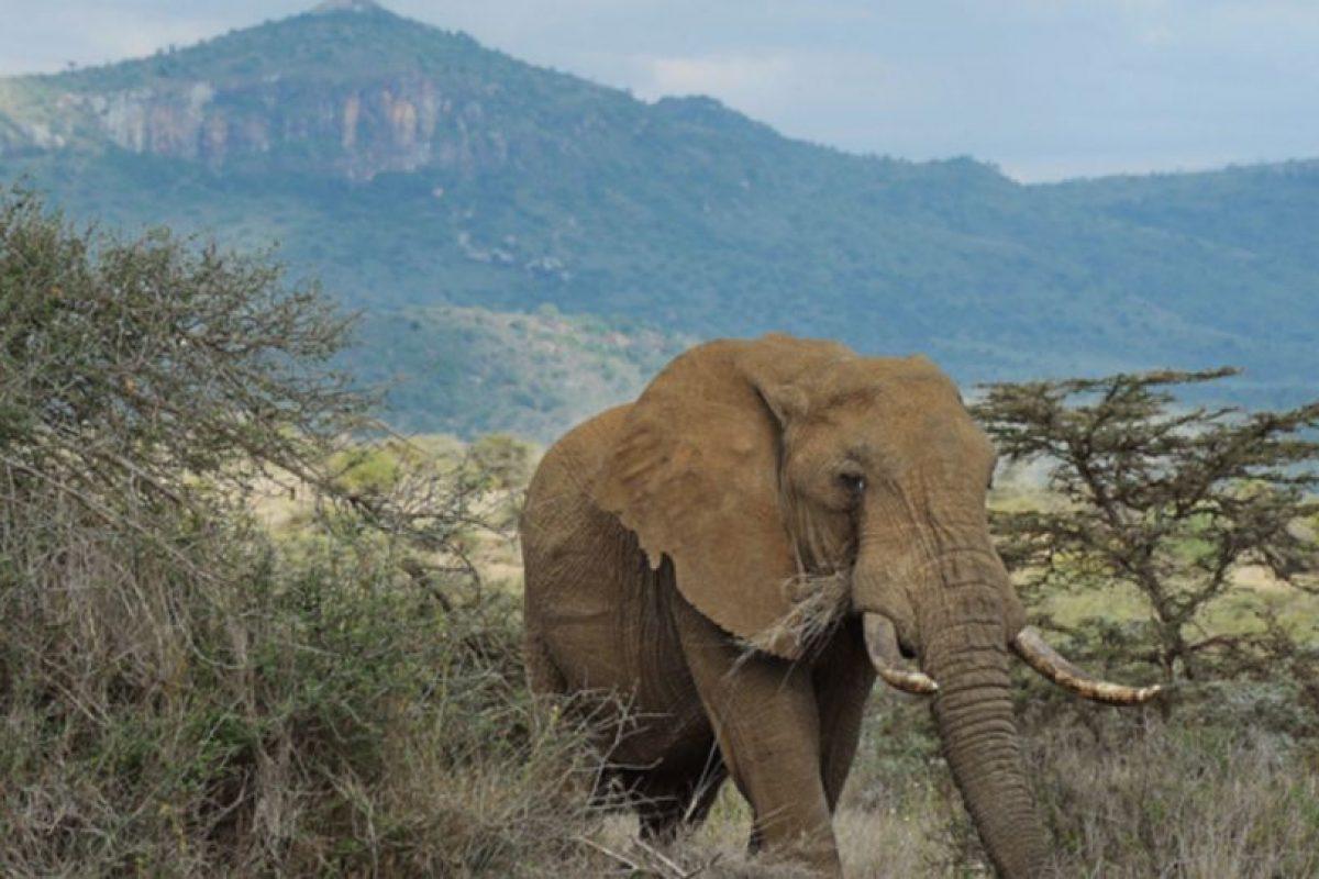La ley en el Sudeste Asiático no es clara con zoológicos ni con manejo de animales salvajes. Foto:vía Getty Images. Imagen Por: