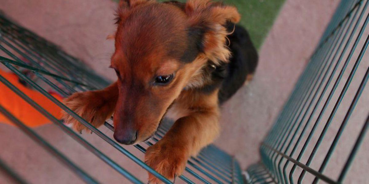 #NoSonMuebles: la campaña que busca que los animales sean incluidos en la nueva Constitución