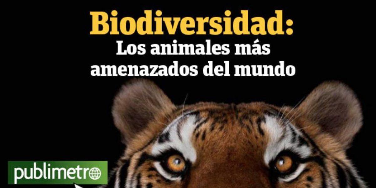 Infografía: biodiversidad, los animales más amenazados del mundo