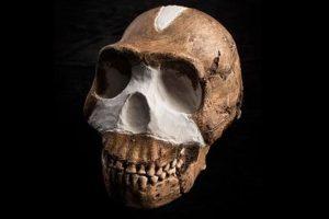 Homo naledi Foto:Instituto para la Exploración de Especies. Imagen Por: