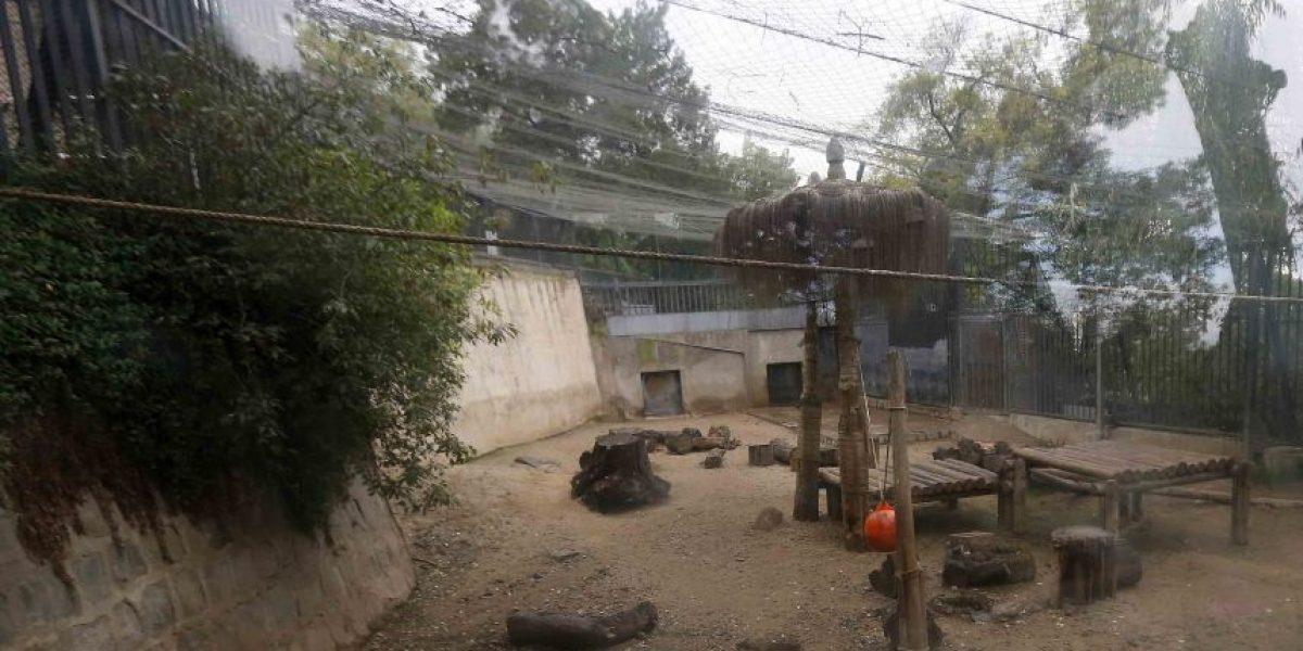 La difícil infancia del joven que decidió suicidarse lanzándose a la jaula de los leones