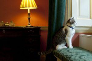 """La mayoría del contenido que los usuarios ven sobre gatos es """"cruzado"""" Foto:Getty Images. Imagen Por:"""
