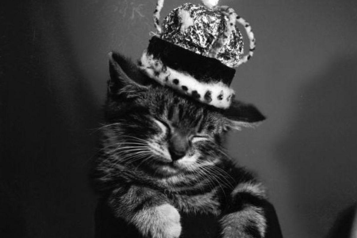Ver videos y fotos de gatos: uno de los comportamientos más populares en Internet Foto:Getty Images. Imagen Por: