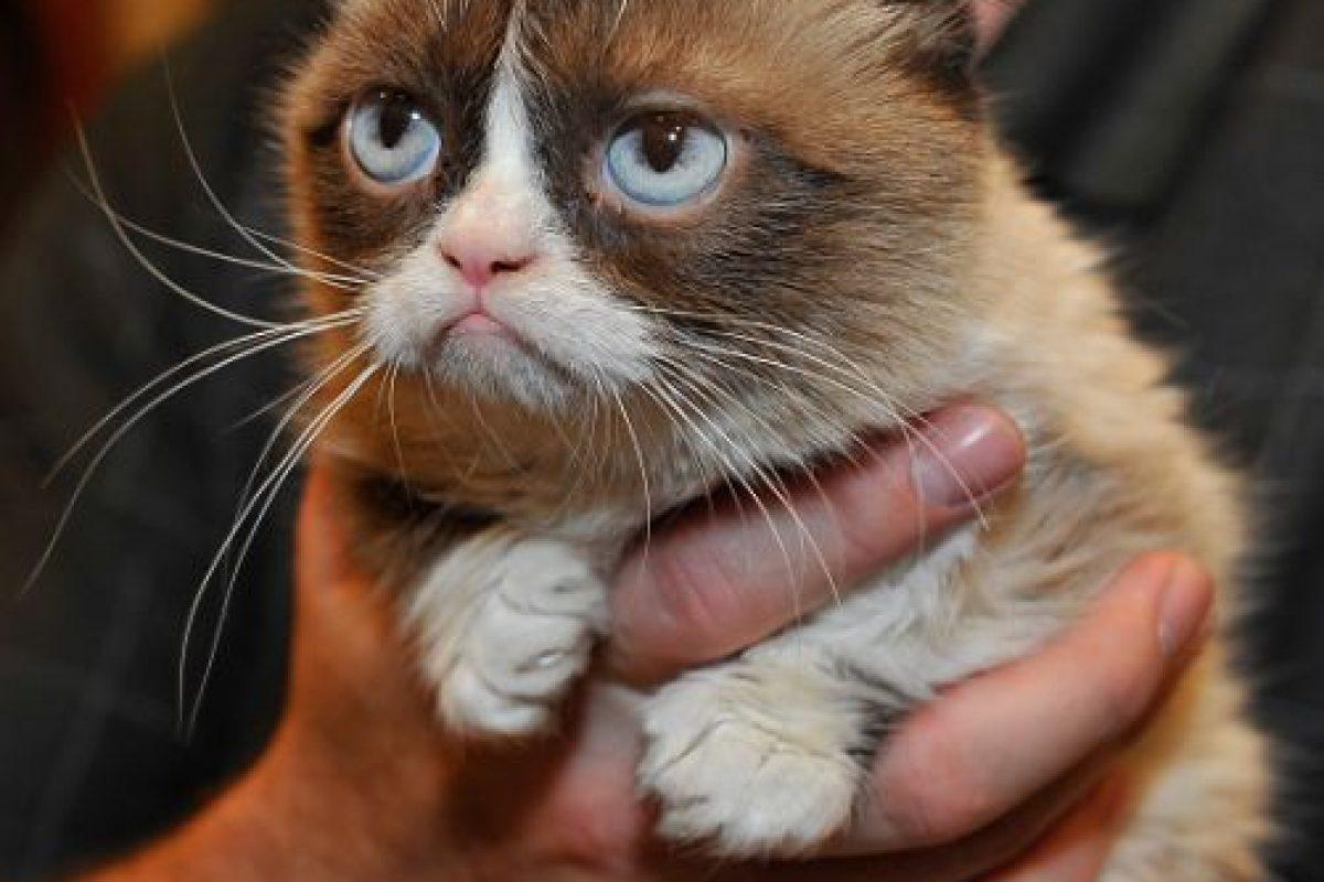 """""""Creo que los videos de gatos llegaron para quedarse"""", afirmó la investigadora Gall Myrick al periódico español """"El País"""". Foto:Getty Images. Imagen Por:"""