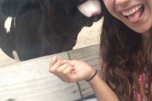 Con una vaca Foto:Imgur. Imagen Por:
