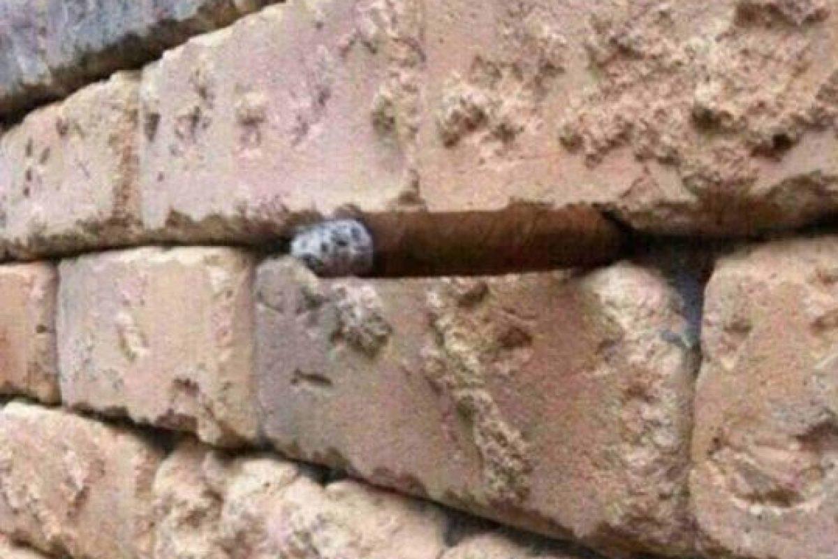 ¿Qué ven en el muro? ¿Nada? ¿Un pequeño bulto? Foto:Twitter. Imagen Por: