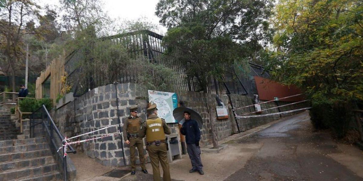Zoológico Metropolitano hará un memorial para despedir a los dos leones muertos