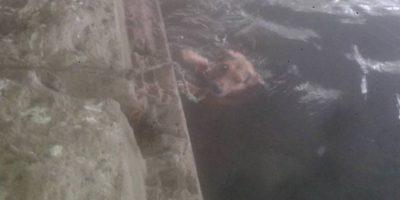 Indignación por perrito que amarraron para que muriera ahogado en río de Curicó