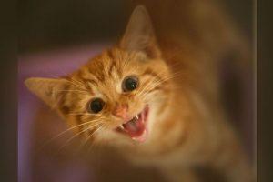 El gato murió luego de ser atropellado accidentalmente. Era la mascota de Jansen. Foto:Getty Imagenes. Imagen Por: