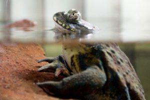 Inauguran el nuevo Recinto de Anfibios del Zoológico Nacional Foto:Agencia Uno. Imagen Por: