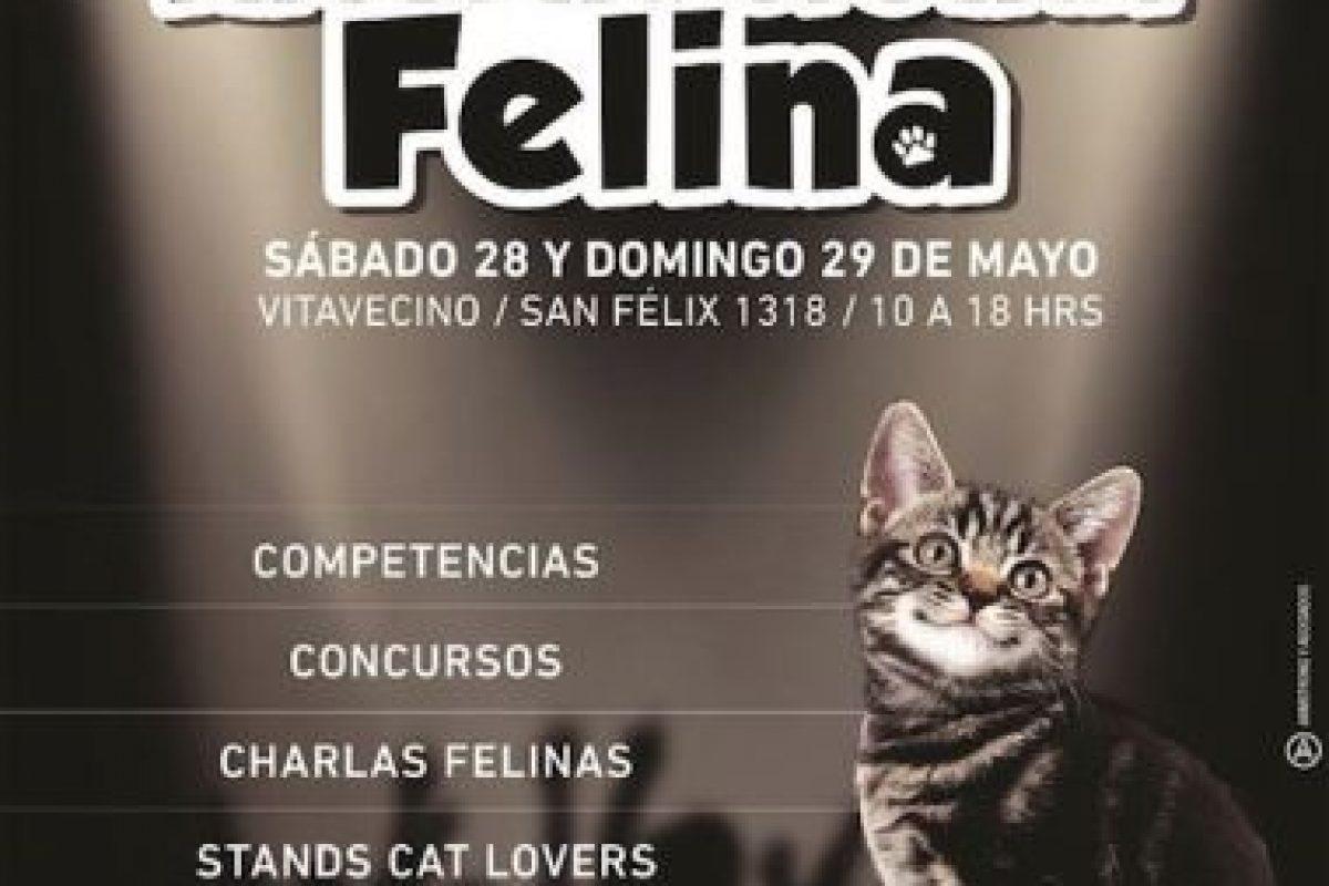 El afiche del evento. Foto:Gentileza. Imagen Por: