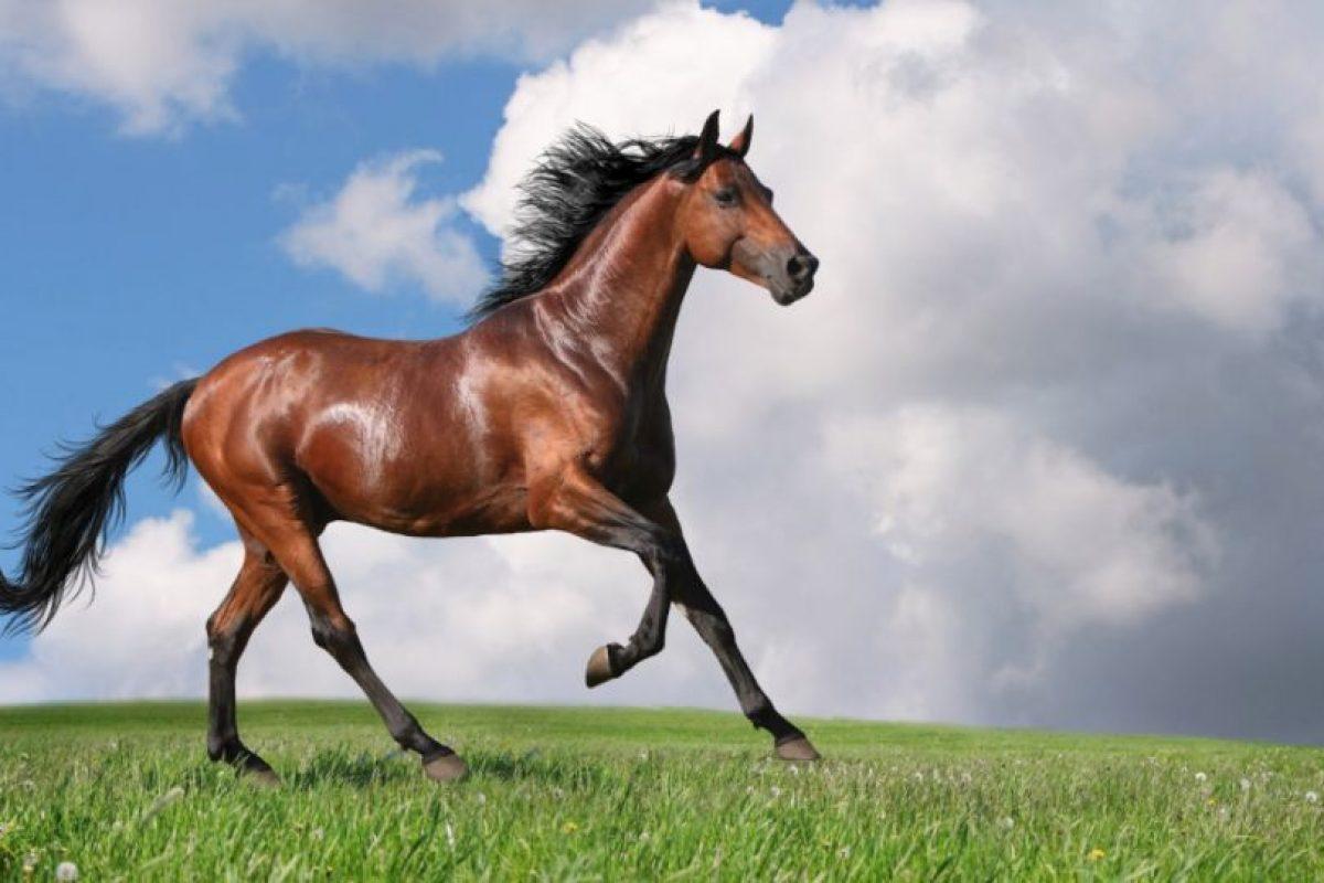 Las coces de los caballos pueden matar a una persona ahí mismo. Foto:vía Wikipedia. Imagen Por: