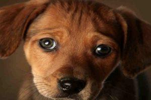 Los cachorros suelen tener rasgos similares a los bebés humanos: ojos y cabeza grandes con relación a su cuerpo, narices y barbillas pequeñas, así como frentes abultadas. Foto:vía Getty Images. Imagen Por: