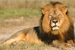 Los dos leones, macho y hembra, tuvieron que ser sacrificados. Foto:vía Getty Images. Imagen Por: