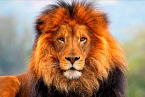 Las redes sociales estallaron. ¿Por qué era culpa de los animales? El zoológico debió tomar precauciones. Foto:vía Getty Images. Imagen Por: