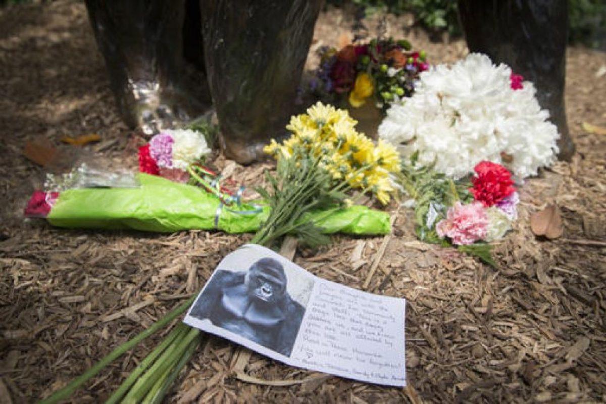 Harambe el gorila asesinado en Cincinnati Foto:AP. Imagen Por: