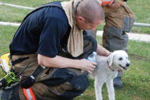 """1. Cachorro """"sonríe"""" al ser rescatado de incendio Foto:Facebook.com/ProvidenceVFC29/?fref=photo. Imagen Por:"""