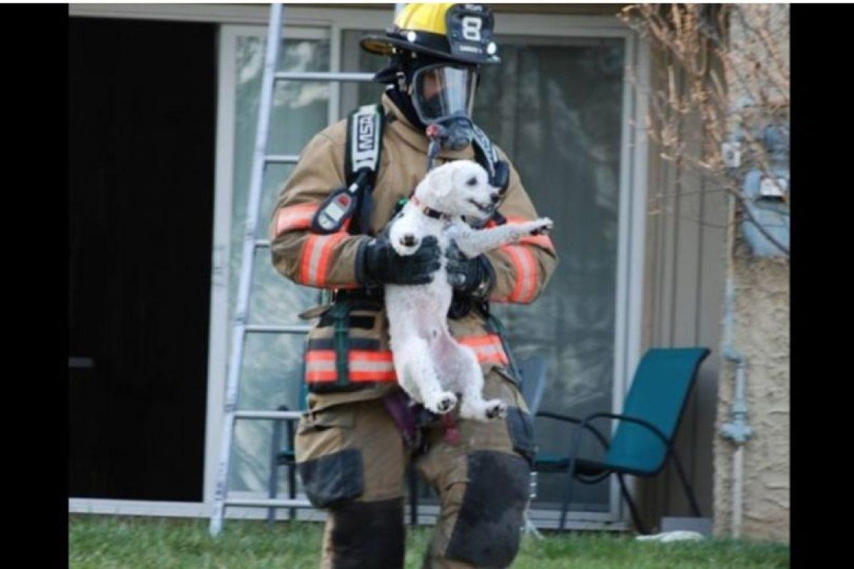 Situaciones poco comunes con la que bomberos del mundo han tenido que lidiar Foto:Facebook.com/ProvidenceVFC29/?fref=photo. Imagen Por: