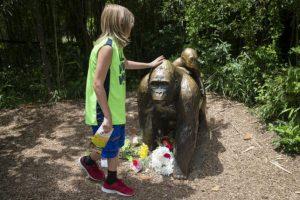 Autoridades del zoológico aseguran que fue la decisión correcta. Foto:AP. Imagen Por: