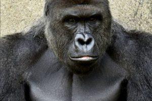 Aunque gente alrededor del mundo ha criticado la decisión, el zoológico asegura fue lo mejor. Foto:facebook.com/cincinnatizoo. Imagen Por: