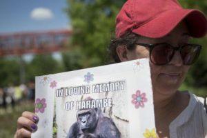 Las redes los acusan de causar la muerte del animal. Foto:vía AP. Imagen Por: