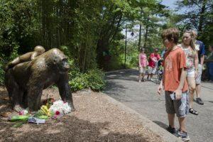 Harambe era un gorila de 17 años que murió luego de que un niño de 3 años se metiera a su jaula por accidente. Foto:AP. Imagen Por: