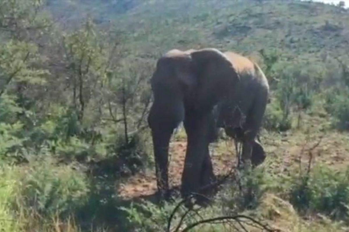 """El vehículo donde viajaba el protagonista de """"Conan el Bárbaro"""" fue embestido por un elefante durante un safari en Sudáfrica. Foto:Instagram / Schwarzenegger. Imagen Por:"""