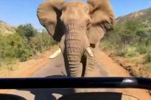 El elefante no se dio por vencido y terminó persiguiendo al actor y sus acompañantes. Foto:Instagram / Schwarzenegger. Imagen Por: