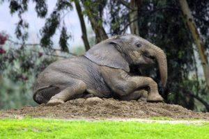 En un ambiente natural alcanzan a vivir entre 40 y 50 años. Foto:Getty Images. Imagen Por: