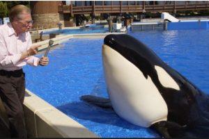 Los desechos humanos que la ballena ingirió pudieron haber contribuido a su muerte. Foto:Facebook.com/OrcaPlett. Imagen Por: