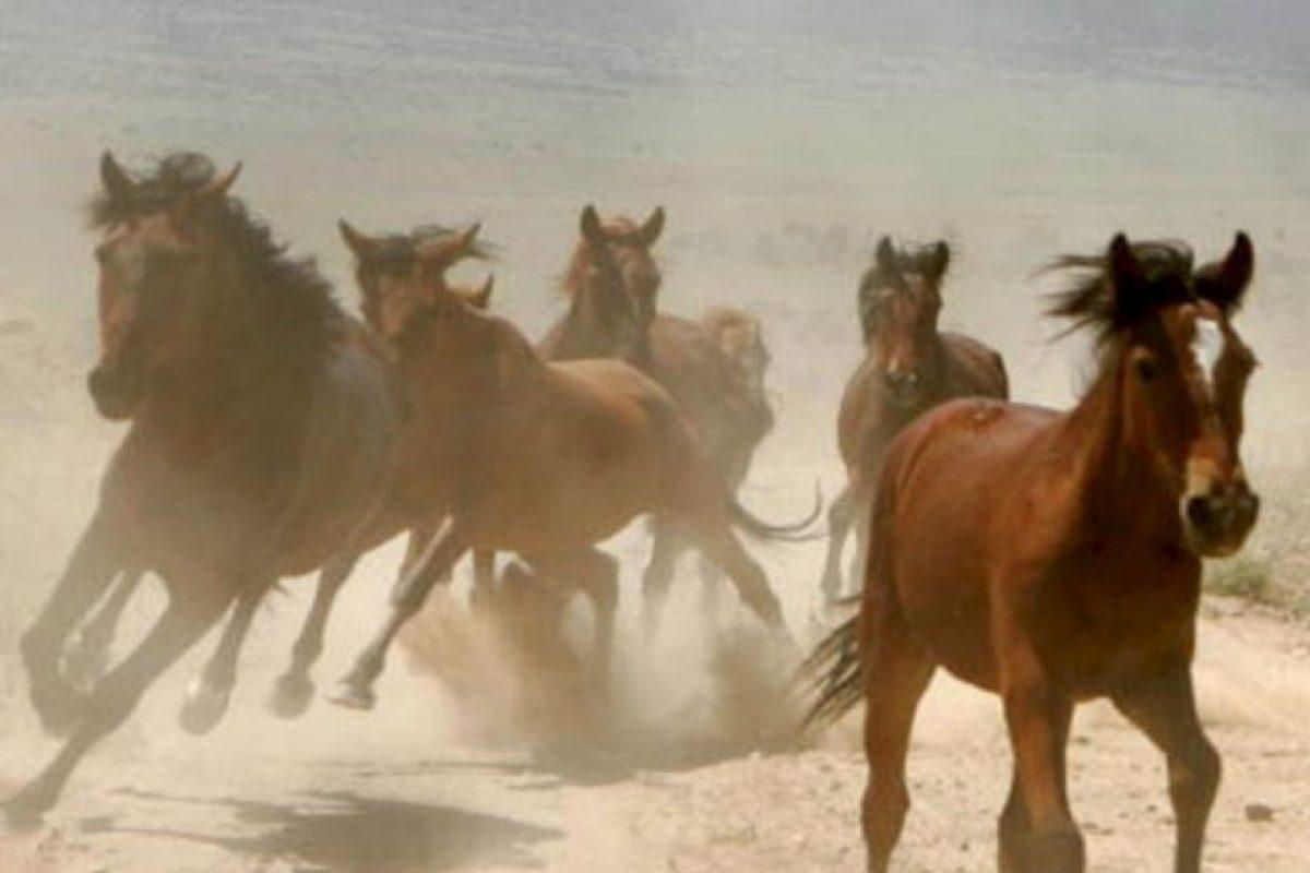 Compró el caballo más caro de su época. Otro se le murió y lo enterró con una silla de montar incrustada con diamantes. Foto:vía Getty Images. Imagen Por: