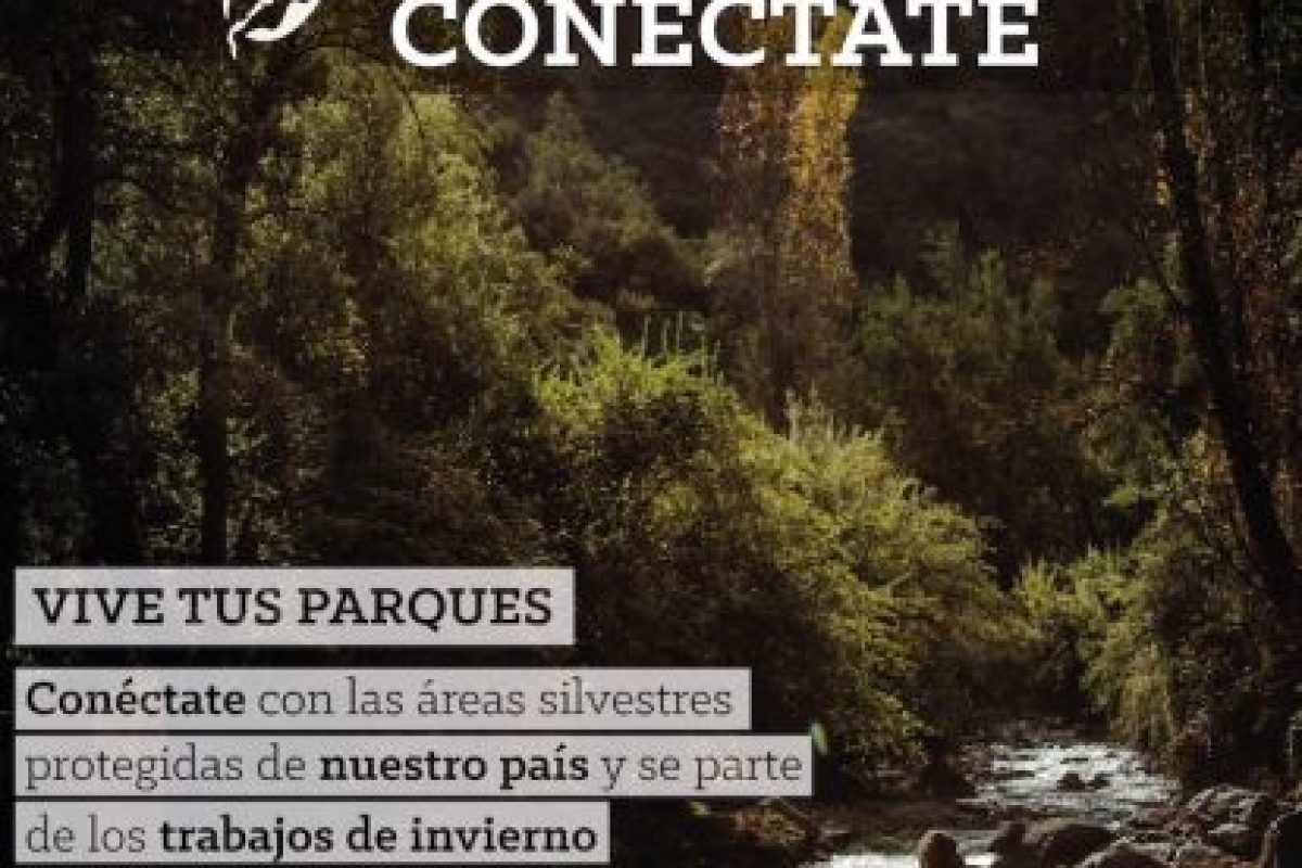 El afiche. Foto:Gentileza. Imagen Por:
