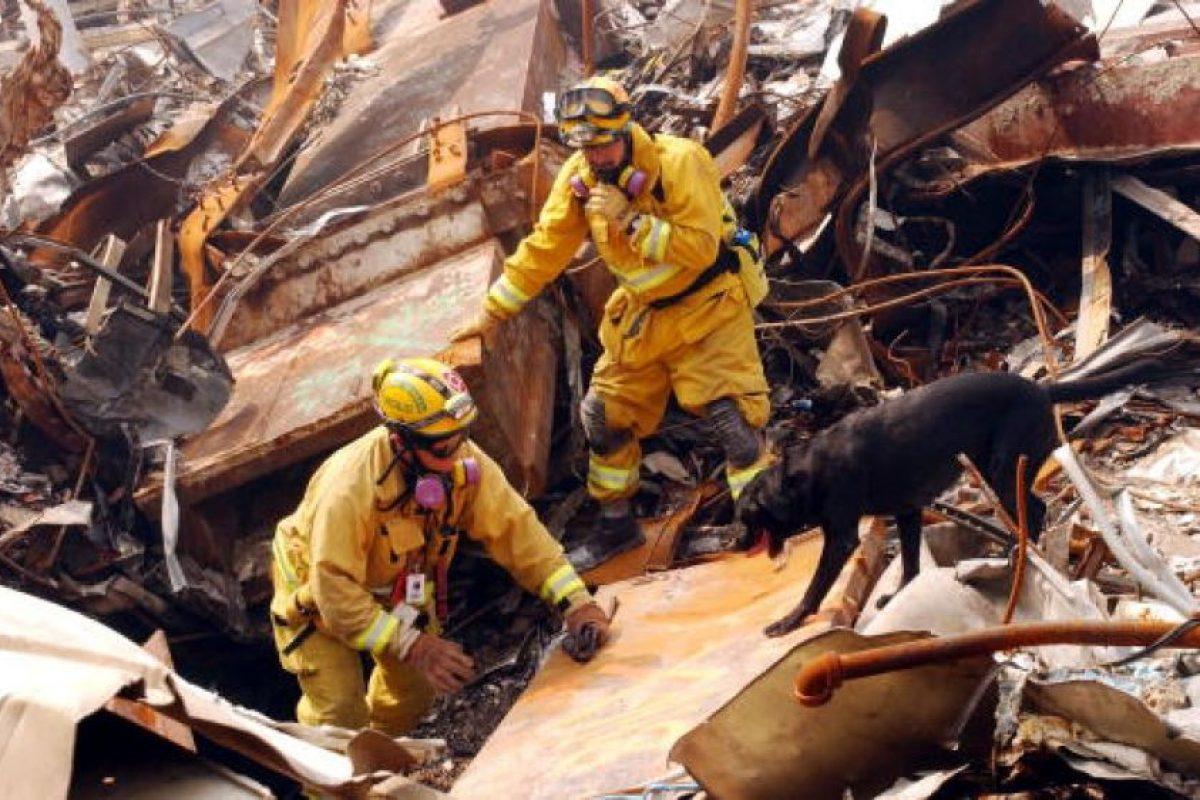 Esto, para que con su olfato pudieran encontrar sobrevivientes Foto:Getty Images. Imagen Por: