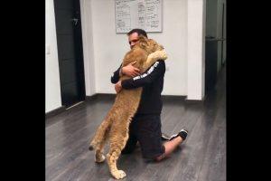 Eduardo Serio dirige la Fundación Black Jaguar White Tiger para rescatar felinos salvajes. Foto:Black Jaguar White Tiger Foundation. Imagen Por:
