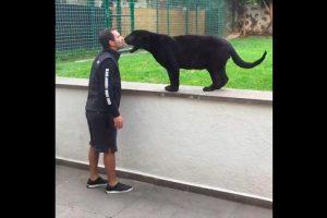 Pero para comérselo a besos. Foto:Black Jaguar White Tiger Foundation. Imagen Por: