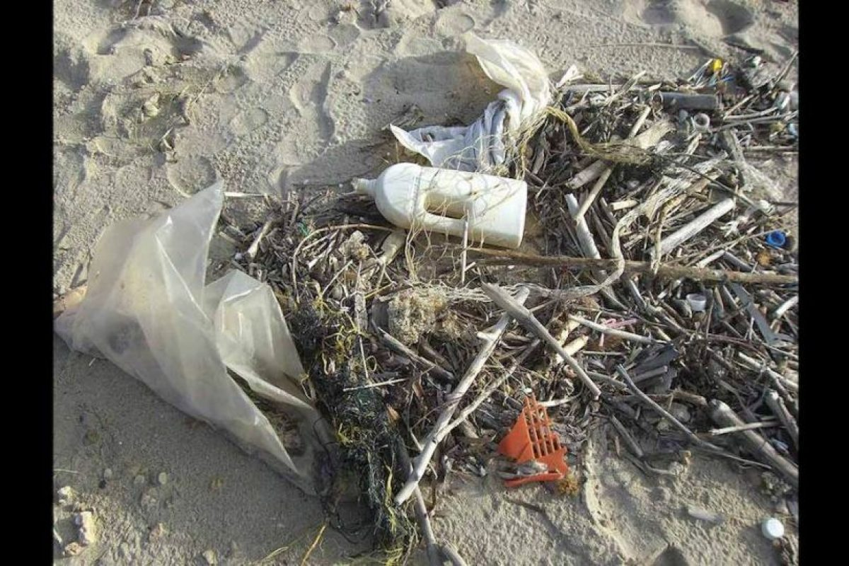 Provocando graves consecuencias en la flora y fauna marina. Foto:Pixabay. Imagen Por: