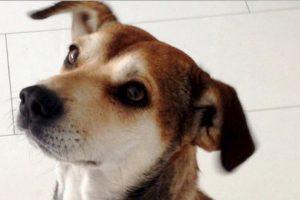 Los adoptantes deben comprometerse a cuidarlos. Foto:vía Reddit. Imagen Por: