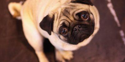 Canadá: Corte Suprema dictamina que actos sexuales con animales de compañía no son delito