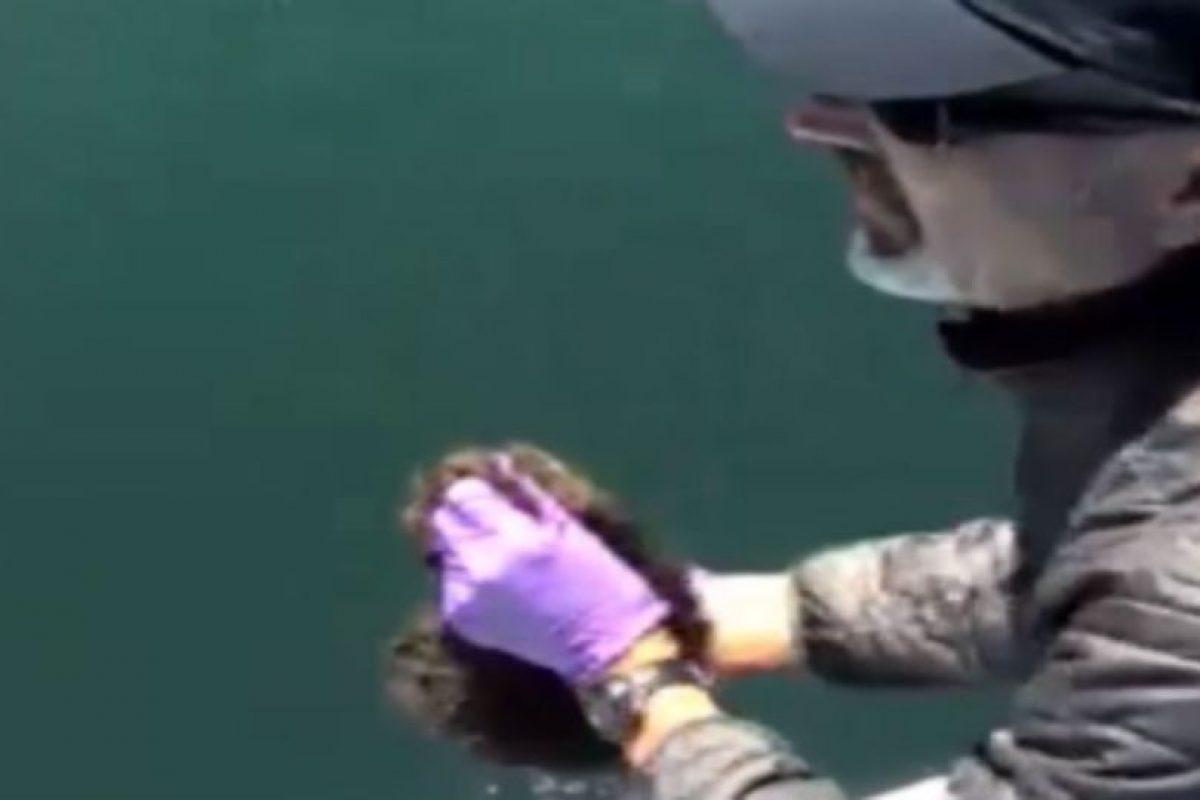 El biólogo esperó para lanzar a la nutria. Foto:Marine Mammal Center. Imagen Por: